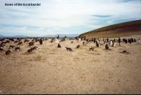 FalklandIsland104.JPG